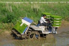 L'agricoltore coreano guida il tipo trapiantatrice azionata a motore di guida del riso alla piantina il giovane riso verde sul ca Fotografie Stock