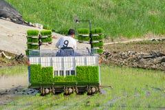 L'agricoltore coreano guida il tipo trapiantatrice azionata a motore di guida del riso alla piantina il giovane riso verde sul ca Fotografie Stock Libere da Diritti