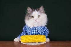 L'agricoltore del gatto pranza il cereale Fotografie Stock Libere da Diritti