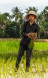 L'agricoltore del riso in Cambogia lavora nel campo Immagine Stock Libera da Diritti
