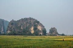 L'agricoltore dell'Asia attraversa il campo su un fondo delle montagne Fotografie Stock Libere da Diritti