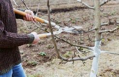 L'agricoltore dell'uomo taglia con gli alberi da frutto dei tagli della potatura in un giardino Fotografie Stock Libere da Diritti