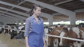 L'agricoltore della ragazza del ritratto fa l'ispezione dell'azienda agricola con i vitelli e le mucche che stanno nell'uccellier video d archivio