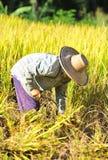 L'agricoltore della Tailandia Immagini Stock Libere da Diritti