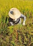 L'agricoltore della Tailandia Immagini Stock