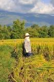 L'agricoltore della Tailandia Fotografia Stock