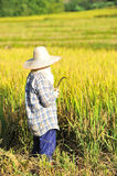L'agricoltore della Tailandia Fotografie Stock
