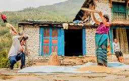 L'agricoltore delle donne sta separando il buon riso da quello cattivo nel Nepal Immagine Stock Libera da Diritti