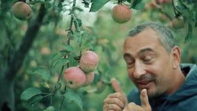 L'agricoltore di Apple nel giardino esamina il raccolto e si rallegra stock footage