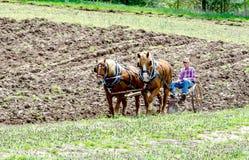l'agricoltore ed il cavallo senior team arando un campo Fotografia Stock