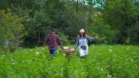 L'agricoltore felice tiene le verdure organiche fresche in una scatola di legno sui precedenti di un orto stock footage