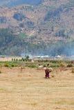 L'agricoltore femminile anziano porta la legna da ardere Fotografie Stock Libere da Diritti