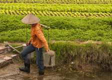 L'agricoltore femminile che tiene due watercans completi sulla spalla di bambù tiene Immagine Stock