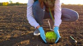 L'agricoltore femminile mette un prototipo della piantina nella terra archivi video