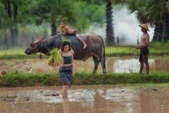 L'agricoltore femminile sta usando il bufalo per arare Fotografia Stock Libera da Diritti