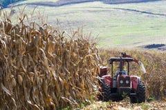 L'agricoltore guida il trattore nella raccolta del cereale Fotografie Stock Libere da Diritti