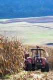 L'agricoltore guida il trattore nella raccolta del cereale Fotografia Stock