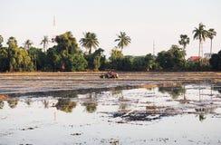 L'agricoltore guida il trattore rosso per l'agricoltura Fotografia Stock Libera da Diritti