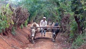 L'agricoltore guida sul cablaggio dei progetti in Shan State, Myanmar Immagine Stock Libera da Diritti