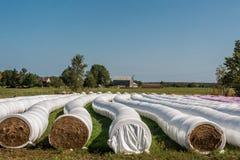 L'agricoltore ha imballato ordinatamente il fieno nei rotoli Fotografia Stock Libera da Diritti