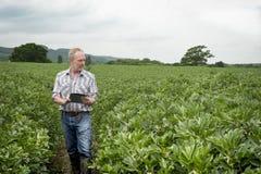 L'agricoltore Holding Tablet Computer guarda a vegetazione densa Fotografie Stock Libere da Diritti