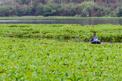 L'agricoltore indefinito ottiene le trappole del pesce Fotografia Stock