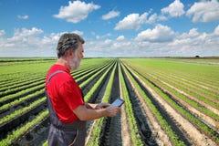 L'agricoltore ispeziona il campo della carota Immagine Stock