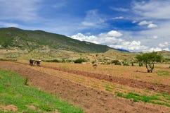 L'agricoltore lavora il suolo con due bufali in mezzo di bello Mo Fotografie Stock
