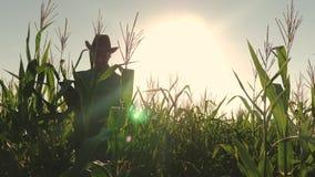 L'agricoltore lavora in un campo di cereale Uomo d'affari con il campo di mais dei controlli della compressa Concetto dell'affare video d archivio
