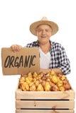 L'agricoltore maschio anziano con le pere ed il cartone firmano Immagini Stock