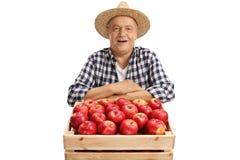 L'agricoltore maturo allegro dietro una cassa ha riempito di mele Fotografie Stock Libere da Diritti
