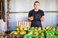 L'agricoltore organico felice con i pomodori in mani si avvicina all'immagazzinamento nei le scatole Fotografia Stock Libera da Diritti