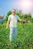 L'agricoltore passa la tenuta del mazzo di cipolle di inverno Fotografia Stock