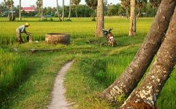 L'agricoltore prepara i prodotti chimici dello spruzzo sul giacimento del riso al tramonto Immagini Stock