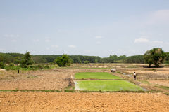 L'agricoltore prepara piantare il riso alla campagna Fotografia Stock