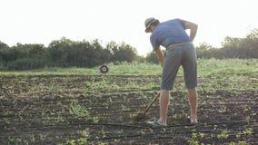 L'agricoltore rimuove le erbacce dalla zappa nel campo di grano con bosco giovane all'azienda agricola organica di eco Immagini Stock