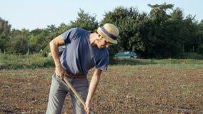 L'agricoltore rimuove le erbacce dalla zappa nel campo di grano con bosco giovane all'azienda agricola organica di eco Fotografia Stock