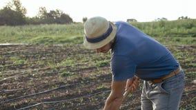 L'agricoltore rimuove le erbacce dalla zappa nel campo di grano con bosco giovane all'azienda agricola organica di eco Immagine Stock