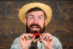 L'agricoltore rustico in cappello di paglia gradisce il gusto piccante Agricoltore che presenta a peperoncino caldo fondo di legn immagini stock