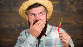 L'agricoltore rustico in cappello di paglia gradisce il gusto piccante Agricoltore del raccolto del pepe della tenuta dell'uomo c immagini stock
