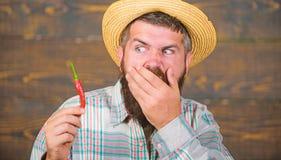 L'agricoltore rustico in cappello di paglia gradisce il gusto piccante Agricoltore del raccolto del pepe della tenuta dell'uomo c immagine stock