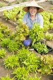 L'agricoltore senior femminile felice che lavora nelle verdure coltiva Fotografia Stock