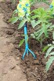 L'agricoltore sta allentando il suolo intorno al cespuglio del pomodoro facendo uso della mano garde Fotografie Stock