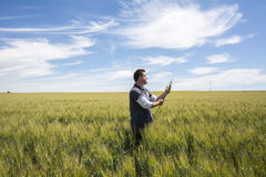 L'agricoltore sta controllando il grano di qualità del raccolto Fotografia Stock