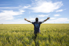 L'agricoltore sta guardando la qualità del grano del raccolto Fotografia Stock