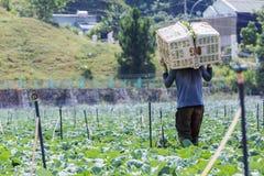 L'agricoltore sta lavorando al campo Fotografie Stock Libere da Diritti