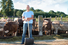 L'agricoltore sta lavorando all'azienda agricola con le mucche da latte Fotografia Stock Libera da Diritti