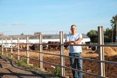 L'agricoltore sta lavorando all'azienda agricola con le mucche da latte Fotografie Stock Libere da Diritti
