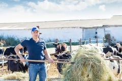 L'agricoltore sta lavorando all'azienda agricola con le mucche da latte Immagine Stock