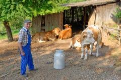 L'agricoltore sta lavorando all'azienda agricola organica Immagini Stock